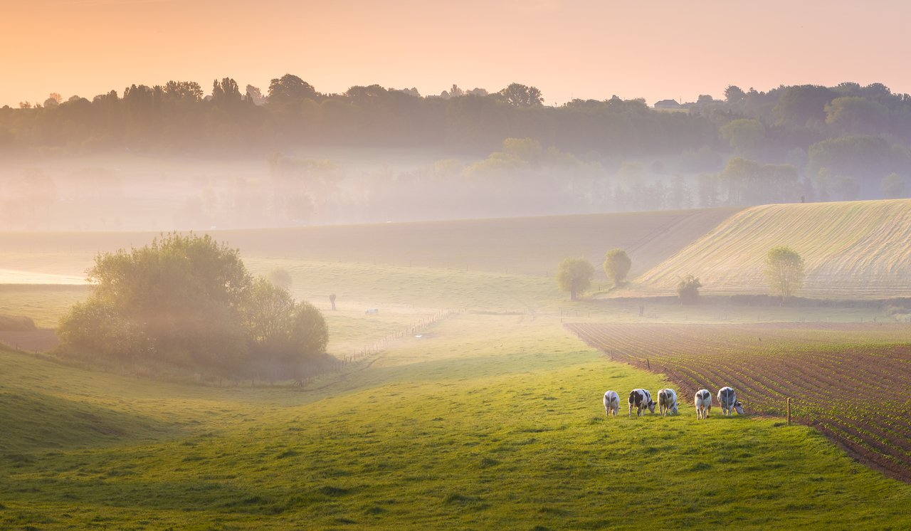 De Vlaamse Ardennen